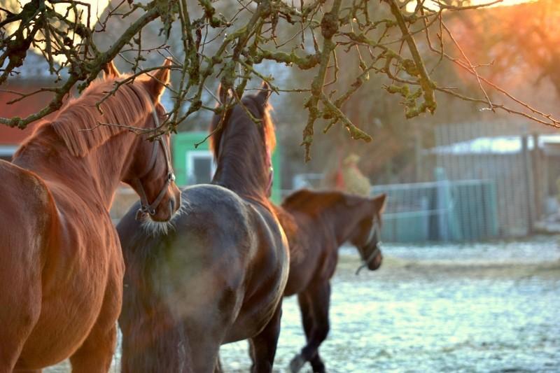 Hästar behöver parasitkontrolleras